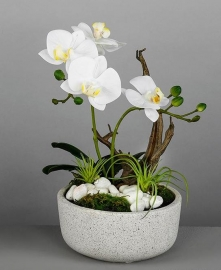 Maceta Orquidea Real Blanco 33cm